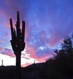 Silhueta do Saguaro Foto de Stock Royalty Free