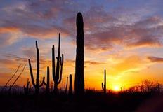 Silhueta do Saguaro gigante Fotos de Stock
