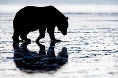Silhueta do urso de Brown, lago Clark National Park, Alaska imagens de stock