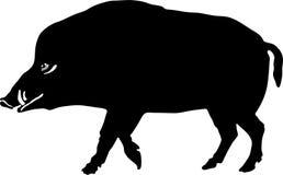 Silhueta do varrão selvagem Imagens de Stock