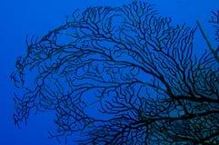 Silhueta do ventilador de mar Imagem de Stock