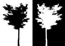 Silhueta do vetor da árvore Fotos de Stock Royalty Free