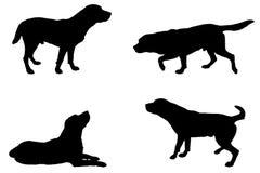 Silhueta do vetor de um cão Imagem de Stock Royalty Free
