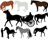 Silhueta do vetor dos cavalos Imagens de Stock