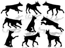 Silhueta dos cães Fotografia de Stock