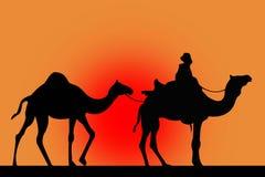 Silhueta dos camelos em um vermelho Foto de Stock