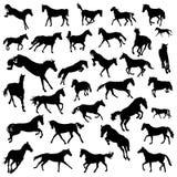 Silhueta dos cavalos Foto de Stock