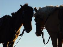 Silhueta dos cavalos Fotografia de Stock Royalty Free