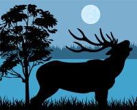 Silhueta dos cervos Fotos de Stock Royalty Free