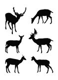Silhueta dos cervos Imagem de Stock Royalty Free