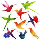 Silhueta dos colibris Ilustração da aguarela Imagem de Stock