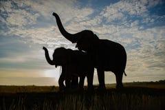 A silhueta dos elefantes Fotografia de Stock Royalty Free
