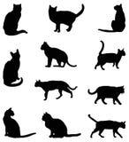 Silhueta dos gatos Imagem de Stock