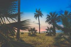 Silhueta dos jovens que andam ao longo da praia no por do sol, o efeito de um filtro do vintage fotografia de stock