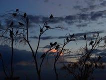 Silhueta dos pássaros Fotografia de Stock Royalty Free