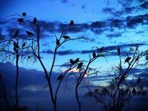 Silhueta dos pássaros Foto de Stock Royalty Free