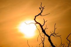 Silhueta dos pássaros na árvore inoperante Imagem de Stock Royalty Free