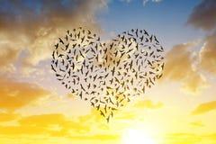Silhueta dos pássaros que voam na formação do coração Foto de Stock Royalty Free