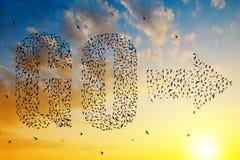 A silhueta dos pássaros que voam no texto vai e na formação da seta Fotografia de Stock Royalty Free