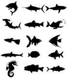 Silhueta dos peixes Fotos de Stock Royalty Free