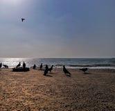 Silhueta dos pombos em uma praia do mar durante o tempo do dia com a luz solar que reflete na água imagem de stock royalty free