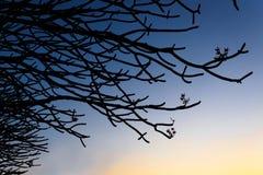Silhueta dos ramos Imagens de Stock Royalty Free