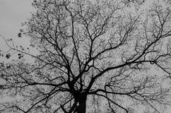 Silhueta dos ramos de árvore Imagens de Stock