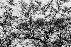 Silhueta dos ramos de árvore em Barcelona Imagens de Stock