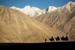 Silhueta dos viajantes da caravana que montam o vale Ladakh de Nubra dos camelos, Índia imagem de stock royalty free