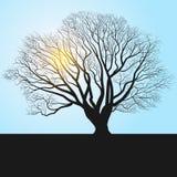 silhueta e meio-dia da árvore ilustração royalty free