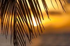 Silhueta em folha de palmeira e o sol Foto de Stock
