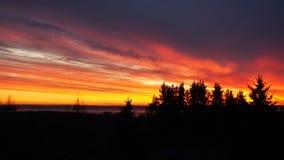 Silhueta horizontal do fundo da paisagem da floresta do por do sol imagem de stock