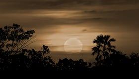 Silhueta Ilustration de Moonscape Foto de Stock