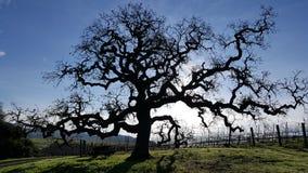 Silhueta impressionante da árvore Fotos de Stock Royalty Free