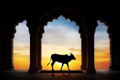 Silhueta indiana da vaca fotografia de stock