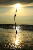 Silhueta inoperante do membro de Backli no beira-mar de Mukah na luz solar de nivelamento imagens de stock