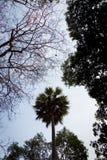 Silhueta larga do ângulo das árvores do rés do chão Fotografia de Stock Royalty Free