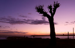 Silhueta no por do sol - céu da árvore do inverno Fotografia de Stock Royalty Free