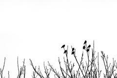 Silhueta oito da parte superior do ¾ n dos pássaros Ð de ramos de árvore no winte fotografia de stock