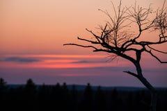 Silhueta pequena da árvore após o por do sol Fotos de Stock Royalty Free