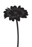 Silhueta preta abstrata da flor do vetor Foto de Stock