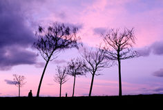 Silhueta preta das árvores Imagens de Stock