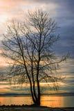Silhueta preta de uma árvore sem as carcaças contra o backgrou fotos de stock royalty free