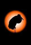 Silhueta preta do pássaro do guindaste, com trajeto de grampeamento Imagens de Stock Royalty Free