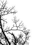 Silhueta preta do vetor de uma árvore desencapada Fotos de Stock Royalty Free