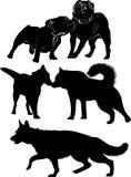 Silhueta preta dos cães isolada ilustração royalty free