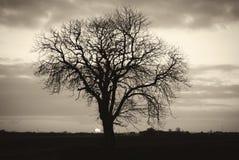 Silhueta preto e branco da árvore de olmo do inverno foto de stock royalty free