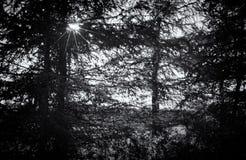 Silhueta preto e branco da floresta com starburst Foto de Stock Royalty Free