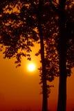 Silhueta romântica da árvore Imagem de Stock Royalty Free