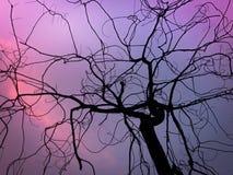 Silhueta seca dos ramos Foto de Stock